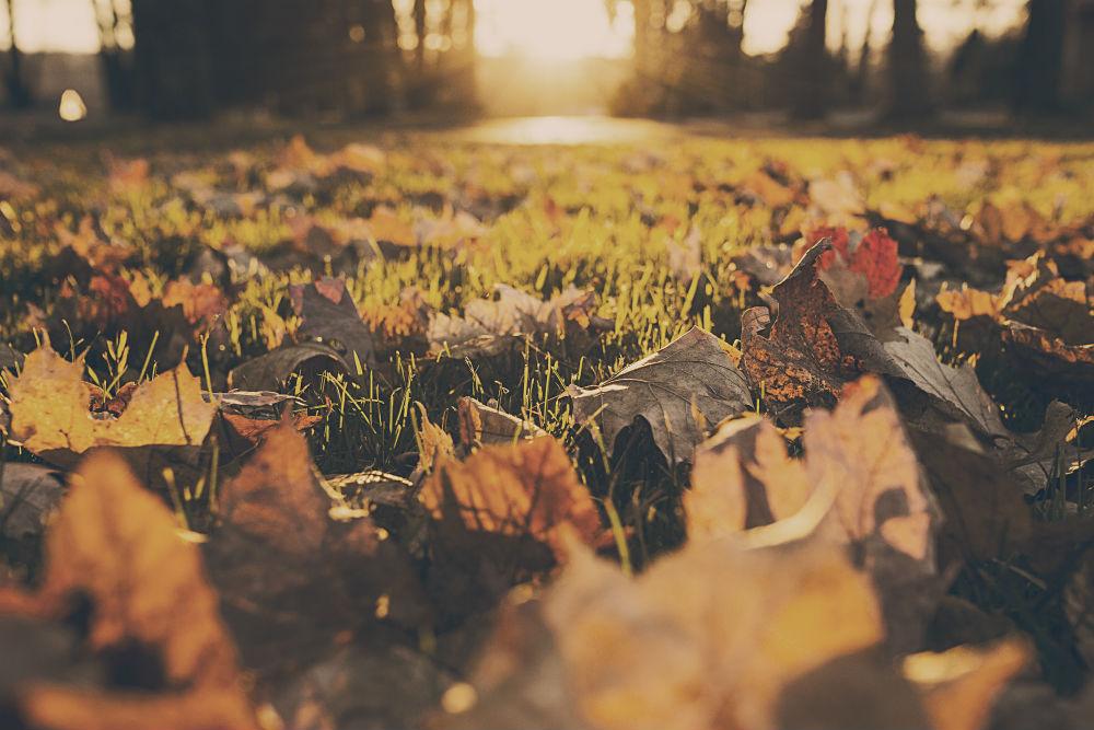7 tipp, hogyan hozd ki a maximumot az őszből