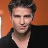 David Boreanaz profilképe