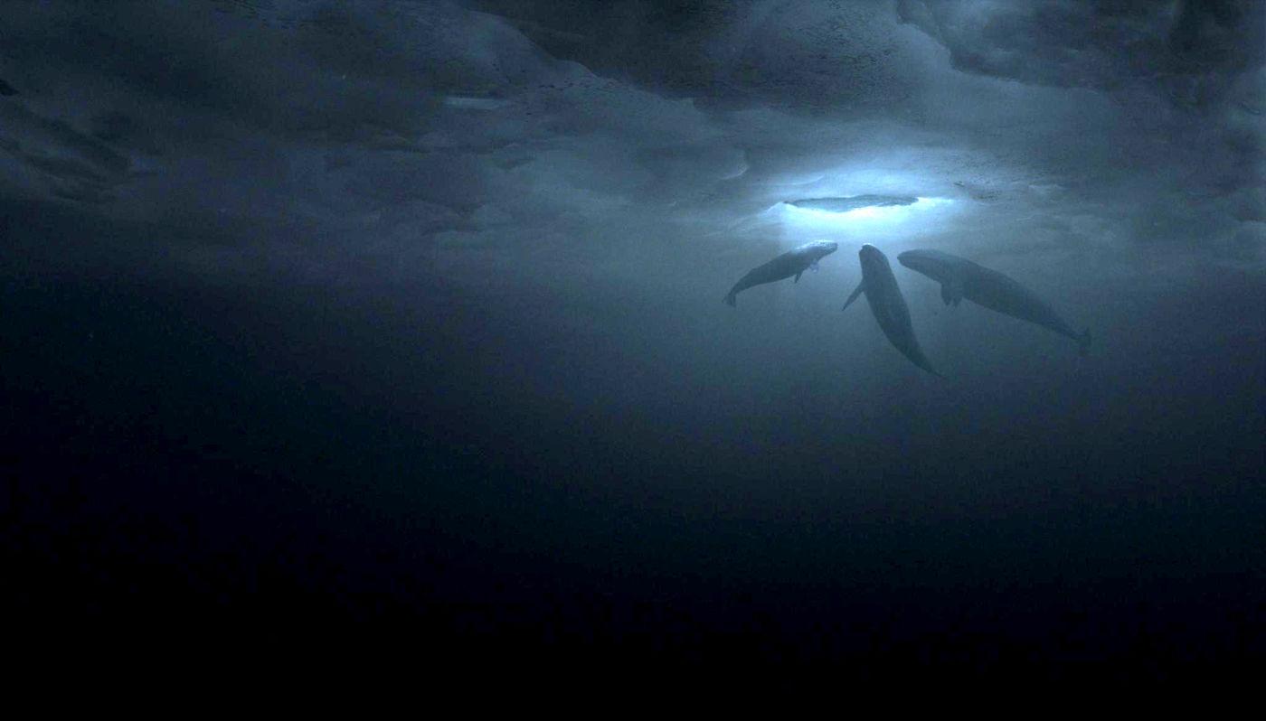 hogy a bálna nem szereti miért nem segítenek a férgek elleni gyógyszerek
