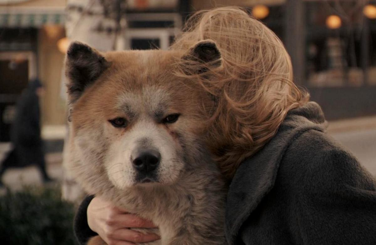 Ezek a legcukibb filmes kutyák