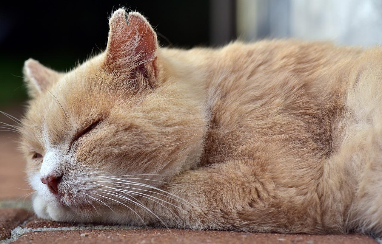Hosszú hétvégén legyél okos! Pihenj is meg ne is!