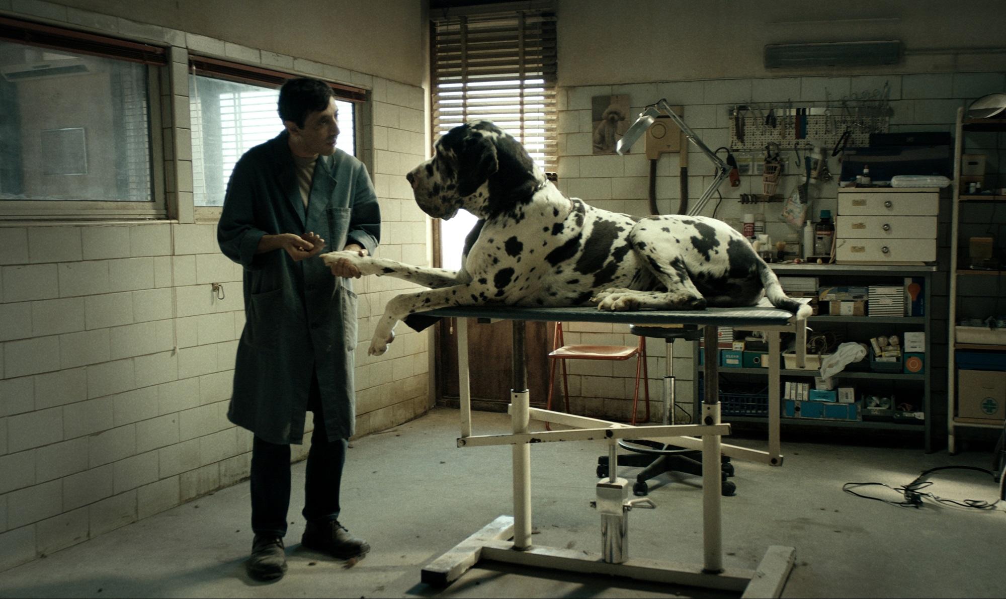 Dogman - Kutyák királya - Miért ilyen sanyarúak az olasz filmek?