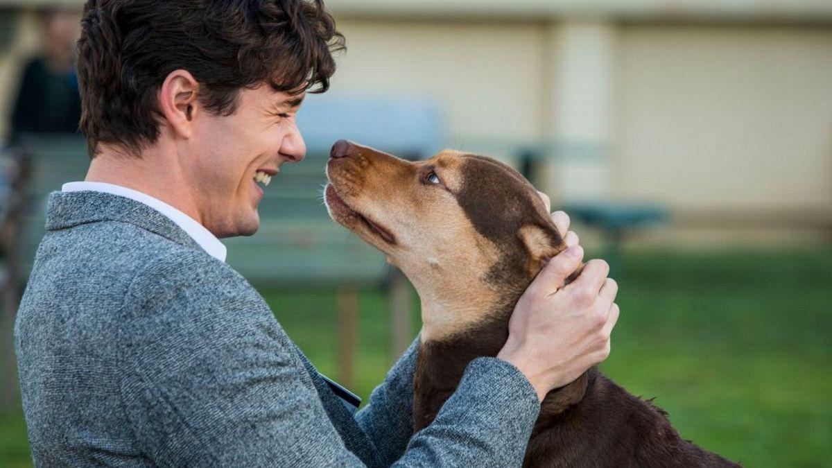 Egy kutya hazatér – A gyerek garantáltan bőgni fog!