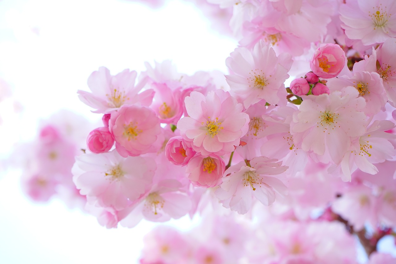 Itt a tavasz, élvezd ki!