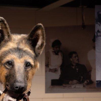 Tárlatvezetés - Emberek és állatok a Nagy Háborúban