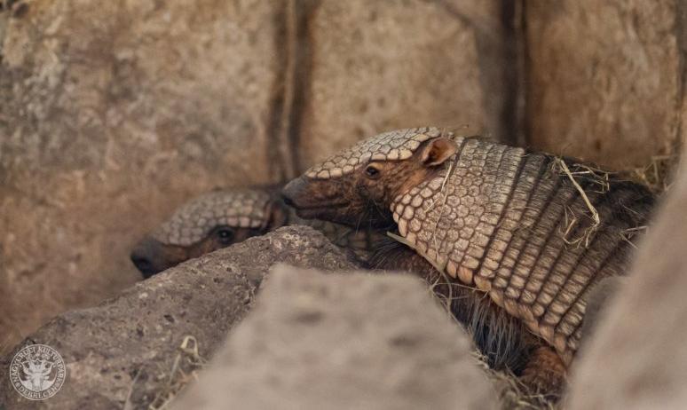 Tatuszerelemre készül a Debreceni Állatkert